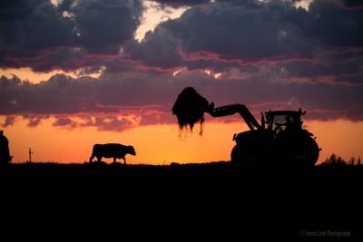 Farming Silhouette
