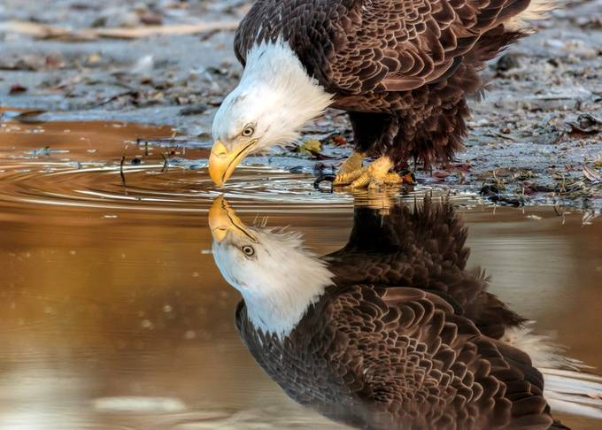 MRK22874-613 by David_Eppley - Animals And Water Photo Contest