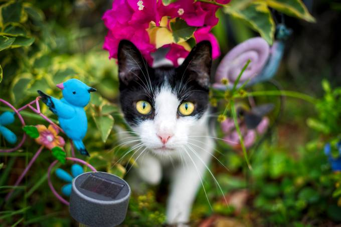 Happy Caturday by CharlieMcMahon - Cute Kittens Photo Contest