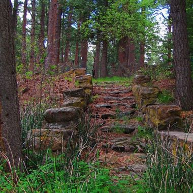 Path in the Woods. Rye, CO.