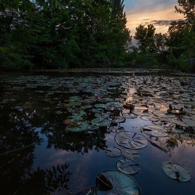 Lilly pad sunset last night! Amazing what you can find your own backyard! Kathryn Albertsons Park Boise, Idaho • • • • #idahoexplored #earthisunique #landscapecaptures #findthelight #gameoftones #adventurevibes #ig_idaho #explorationgram #exploring_shotz