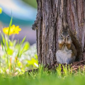 Spent a beautiful spring morning with this very curious squirrel at East Barriere Lake, BC
