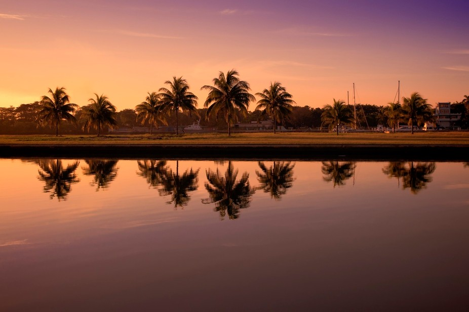 Palm trees reflecting off the water