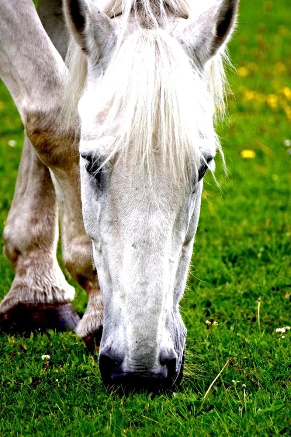 Horse DSC_0655