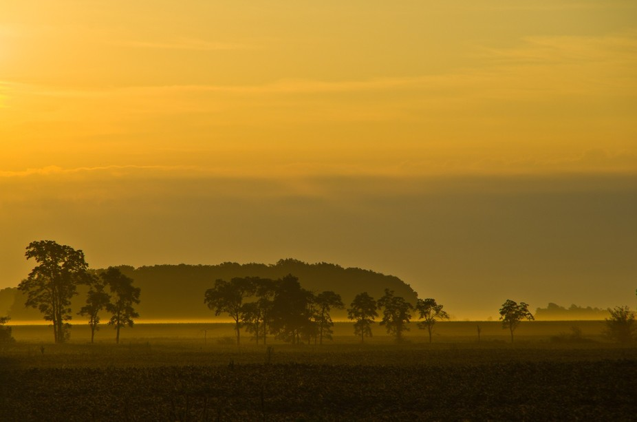A morning blanket of golden fog bathes the pastures of Southeast Allen County, Ohio.