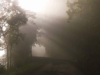 Foggy Winter Mornings