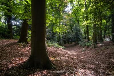 Forest Odapark