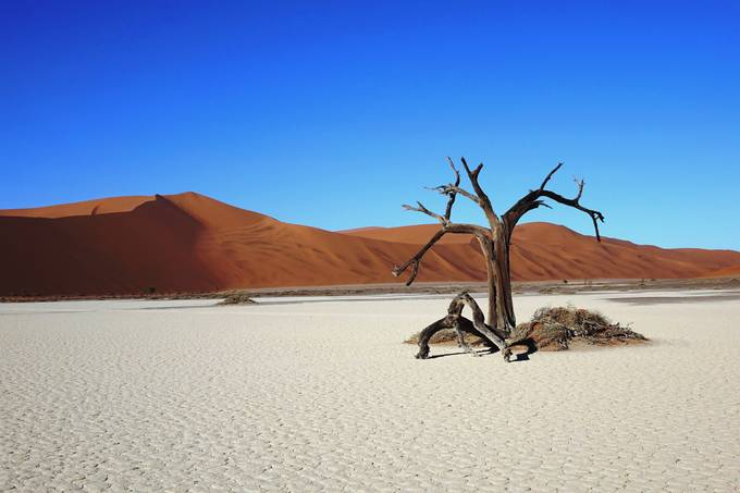 NAMIBIA - SOSSUSVLEI - HIDDEN VLEI - THE TREE by Alexandoro - The Brown Color Photo Contest