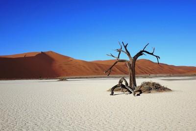 NAMIBIA - SOSSUSVLEI - HIDDEN VLEI - THE TREE