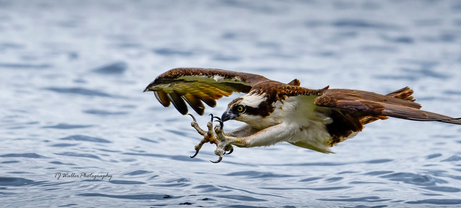 Reaching Out To Touch Someone (Osprey)