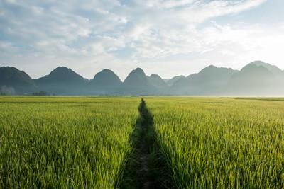 Fields in the BacSon Valley, Vietnam