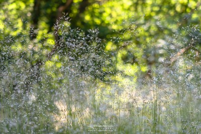 Grass Bokeh Forest
