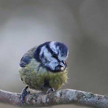 Eyeing Nuts