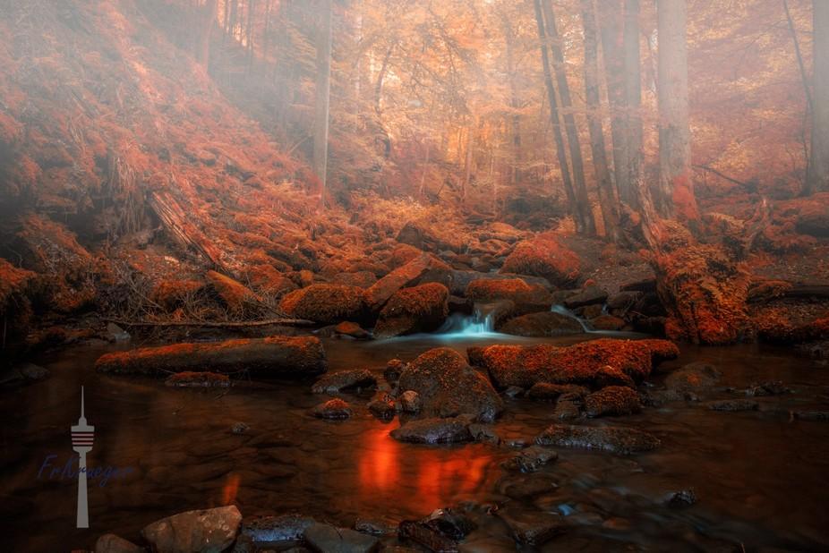 black forest, southwest germay