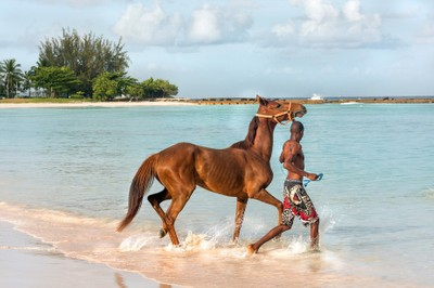 Barbados horse bathing