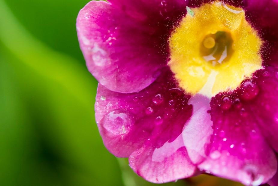 macro flower after a rainfall