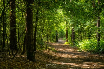 Sunny Path Vlakwater