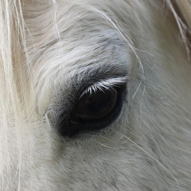 Bumbys eye