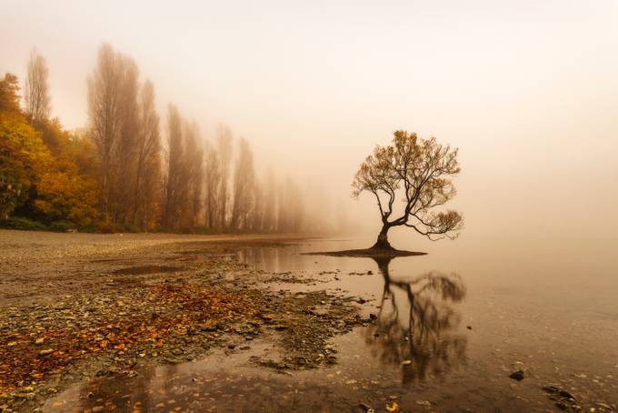 Foggy Wanaka Tree by iamcordz - A Lonely Tree Photo Contest