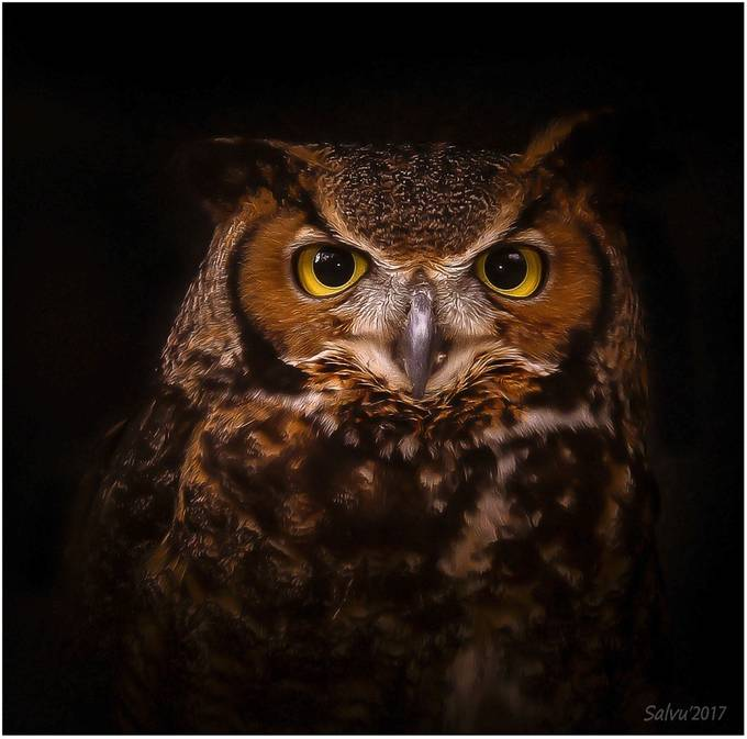 Portrait of an Owl by salvumizzi - Beautiful Owls Photo Contest