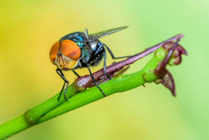 Fly by tinoskiee - Macro Games Photo Contest