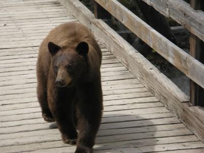 Met a bear on a bridge