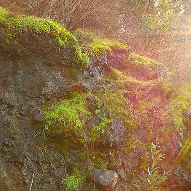 Sunrays on Moss