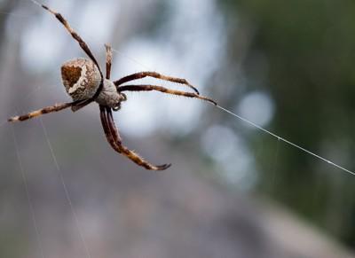 A Spider's Web [REUPLOAD]