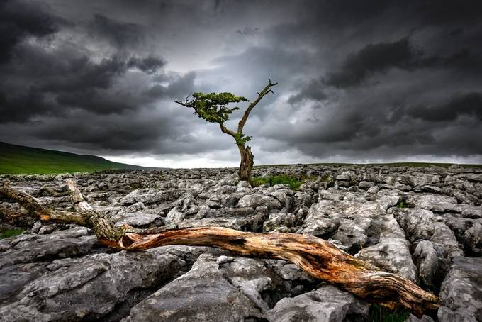 Last man standing by SamGorski - Subjects On The Ground Photo Contest