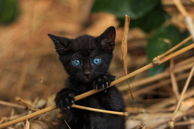 Those eyes by Alkenvaz - Kittens vs Puppies Photo Contest