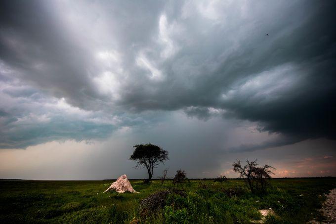 Termite by MarieJordan - Tree Silhouettes Photo Contest