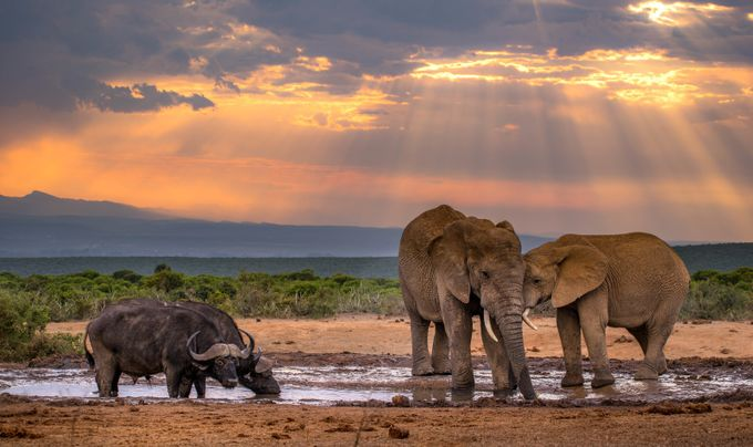 African sunset by Jtrojer - Big Mammals Photo Contest