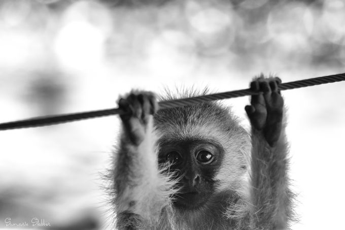 Wild workout by Sumaries - Monkeys And Apes Photo Contest