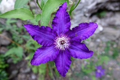A beautiful flower !