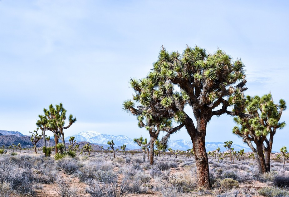 Driving down Desert Queen Mine road provided us with an unobstructed view of the snow covered mou...