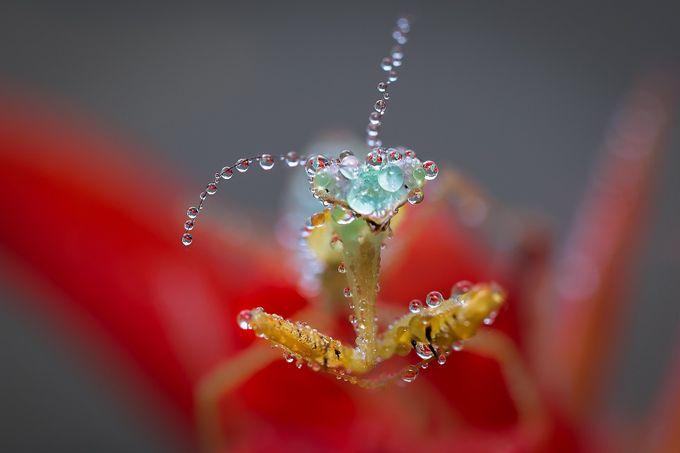 Wet, but happy by AdCarreira - Macro Water Drops Photo Contest