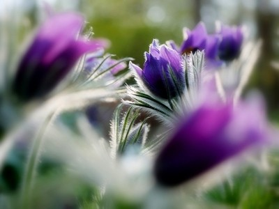 Flowers Season ...