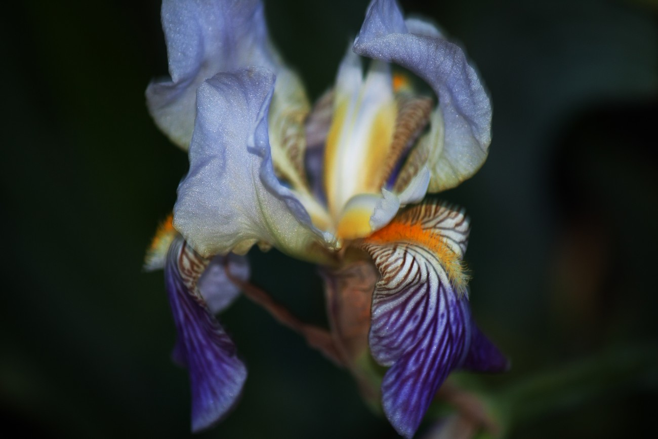 Subtle Iris