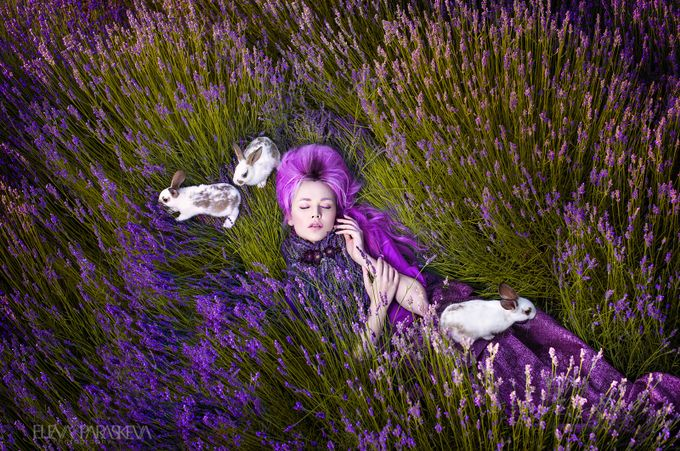 Dreams Made Of Lavender by ElenaParaskeva - One With Nature Photo Contest
