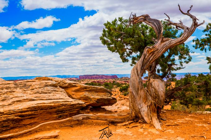 This was such a beautiful tree, it almost looks like it wants a hug or is doing a really nice big stretch, this is definitely one of the top 3 shots from this trip to Moab as well.