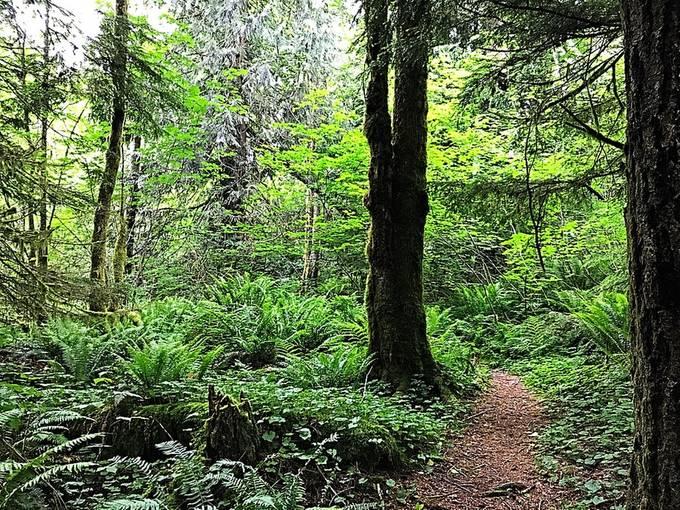 Walking in my forest