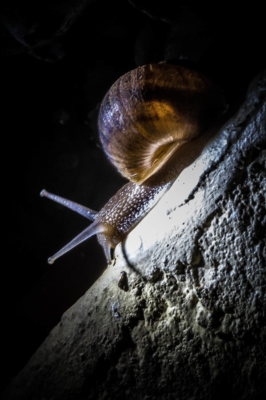 Snail going nowhere slowly