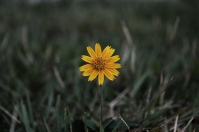 Sol em flor