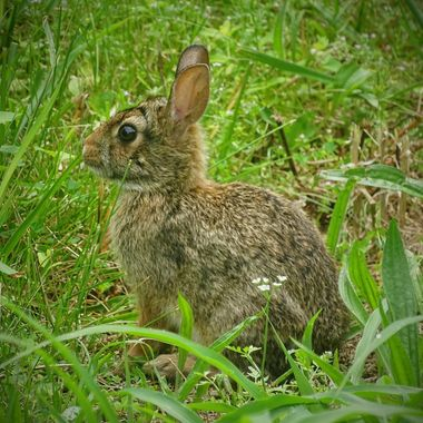 Young Bunny1