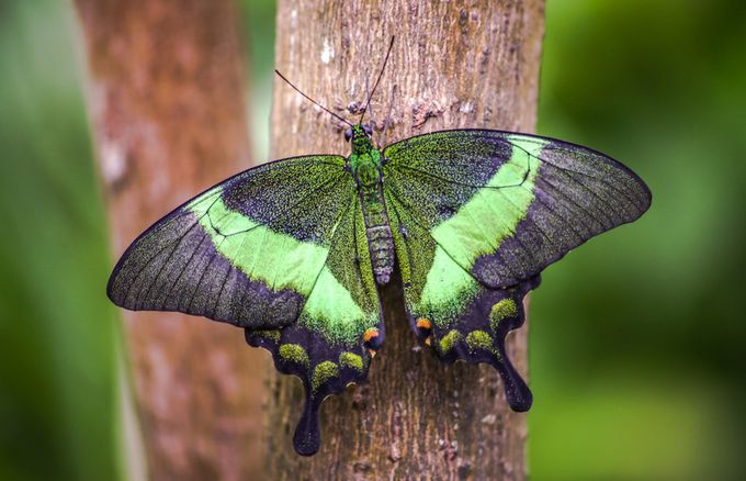 Butterfly #42. by michaelatkinson_5804 - Macro And Patterns Photo Contest