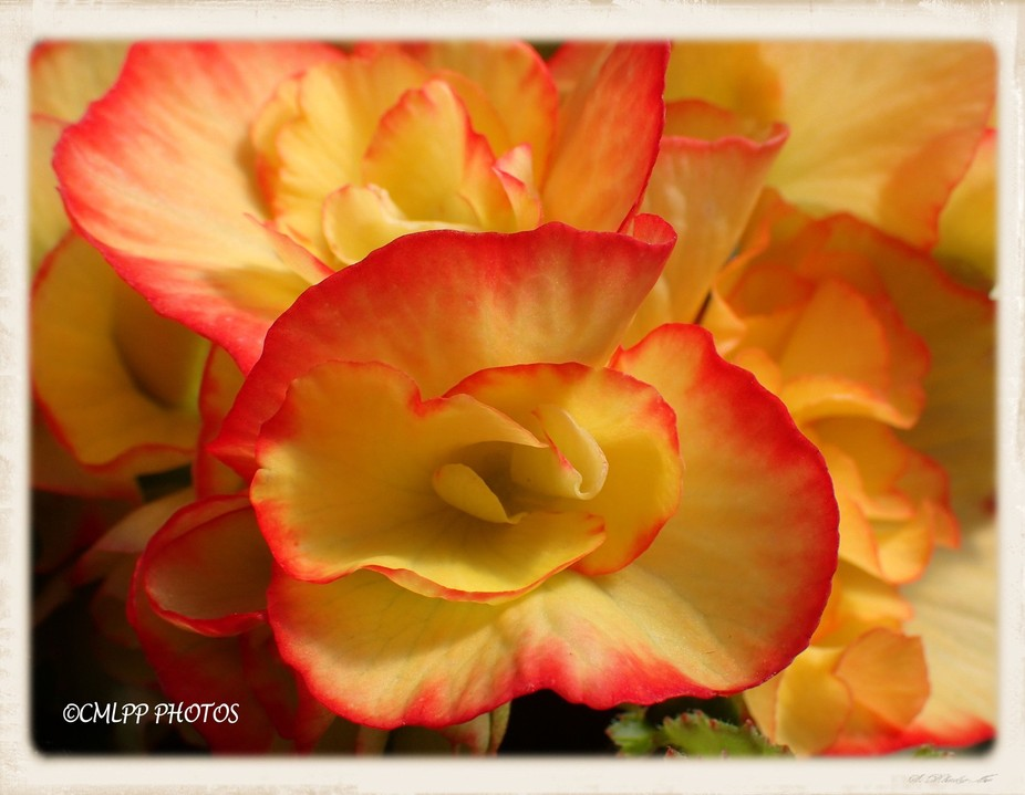 yellow and orange sensuous flower