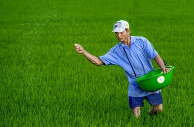 Caring for green rice