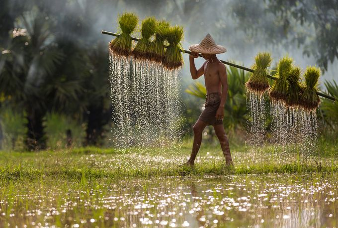 a day in the field by Duangmon - Cultures of the World Photo Contest