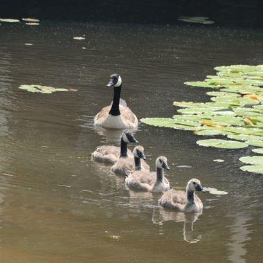 all my ducks in a row