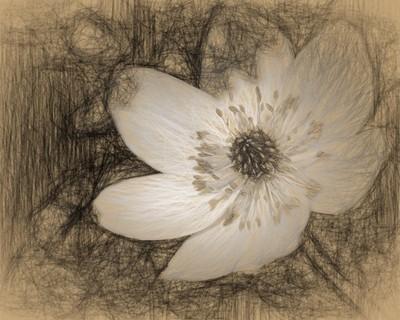 White Wind Flower 0601 Stylized